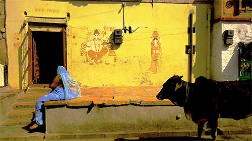 O.Yurdalan-06.02.2011-Jaisalmer-Şehrin sokaklarını tüm canlılar birlikte kullanıyor.P1050037