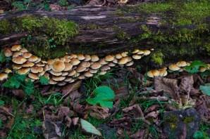 Deniz Kızılkanat - Papart Ormanı ve Karçal Dağları
