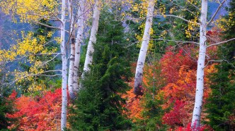 Faruk Akbaş - Papart Ormanı ve Karçal Dağları