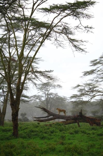 Kenya- Cemaleddin Atasoy