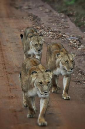 Kenya-Cevdet Cem Caner