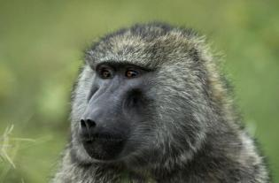 Kenya-Kartal Biçerbay