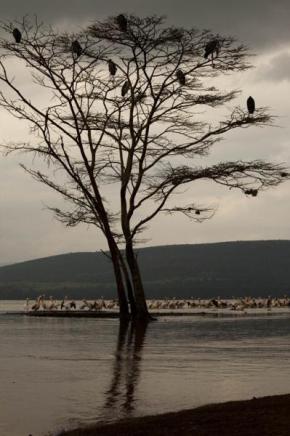 Kenya-Ralfi Çukuril