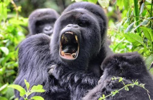 Ruanda- Cevdet Cem Caner