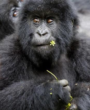 Ruanda- Ralfi Çukuril