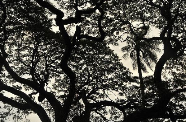 SriLanka- Erhan Koken