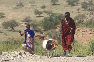 Tanzanya- Hakan Alper Türkgür