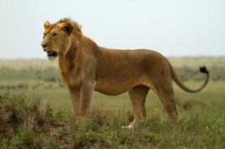 Tanzanya- Sezai Doğdu