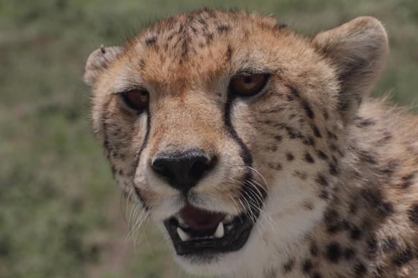 Tanzanya- Tahir Öner