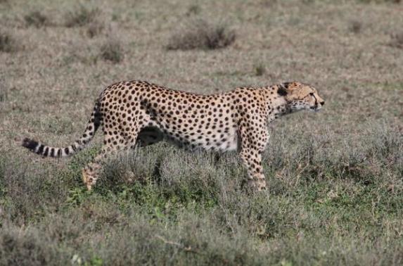 Tanzanya- Vadim Karayusuf