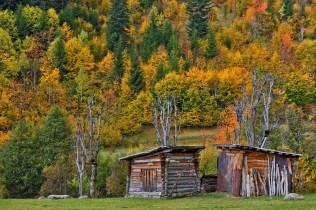 Tamer Günal - - Papart Ormanı ve Karçal Dağları