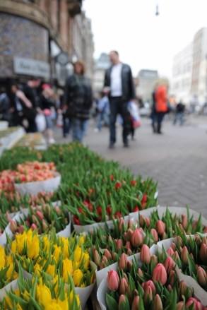 Hollanda dediğimizde akla gelenlerden birisi de laleler. Renk renk goncalar çiçek pazarları ve meydanlardan eksik olmuyor.