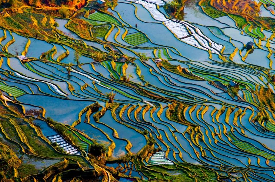 shutterstock_183672989_YuanYang, China (Kopyala)